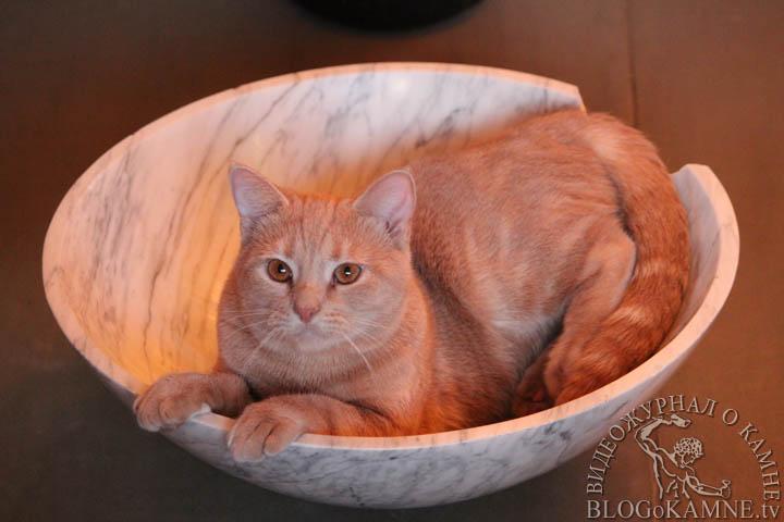 кот в раковине из мрамора